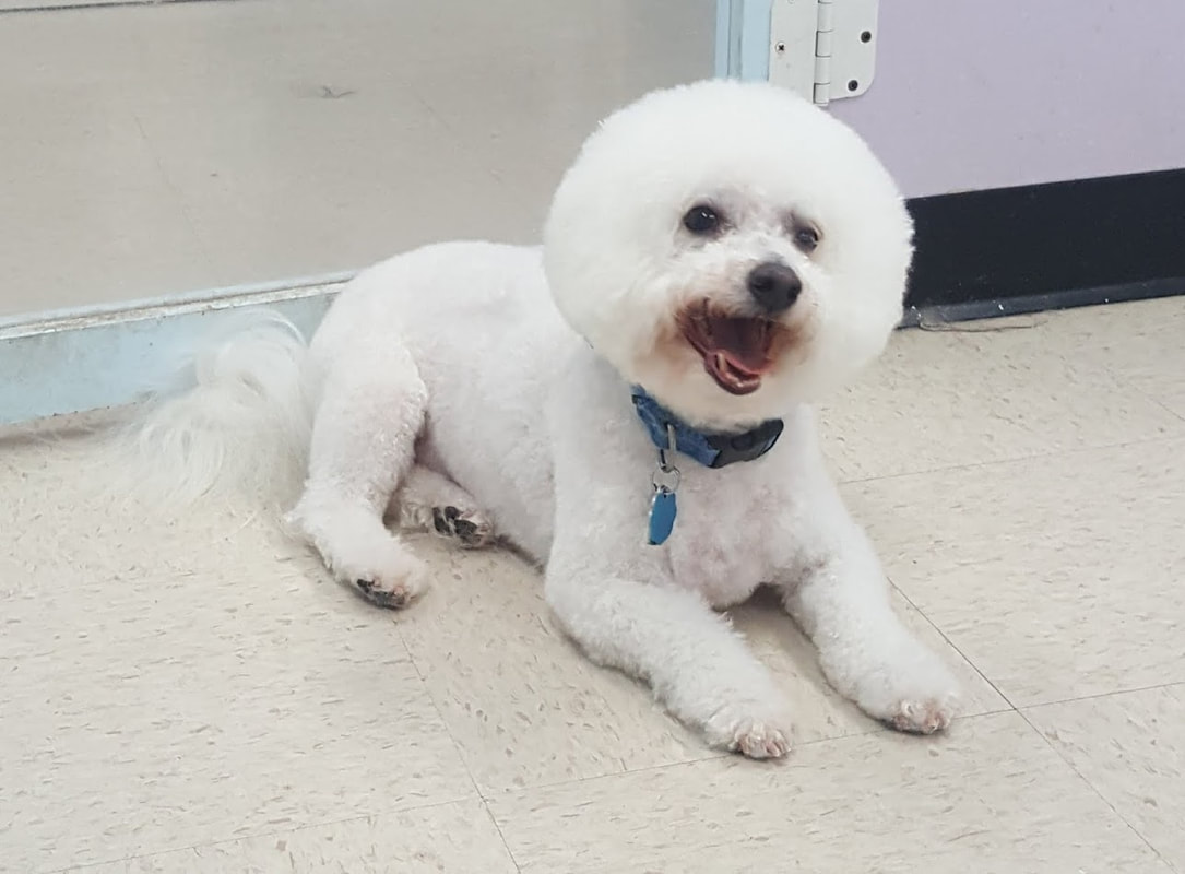 Pretty pets nm expert dog and cat grooming in albuquerque home solutioingenieria Choice Image